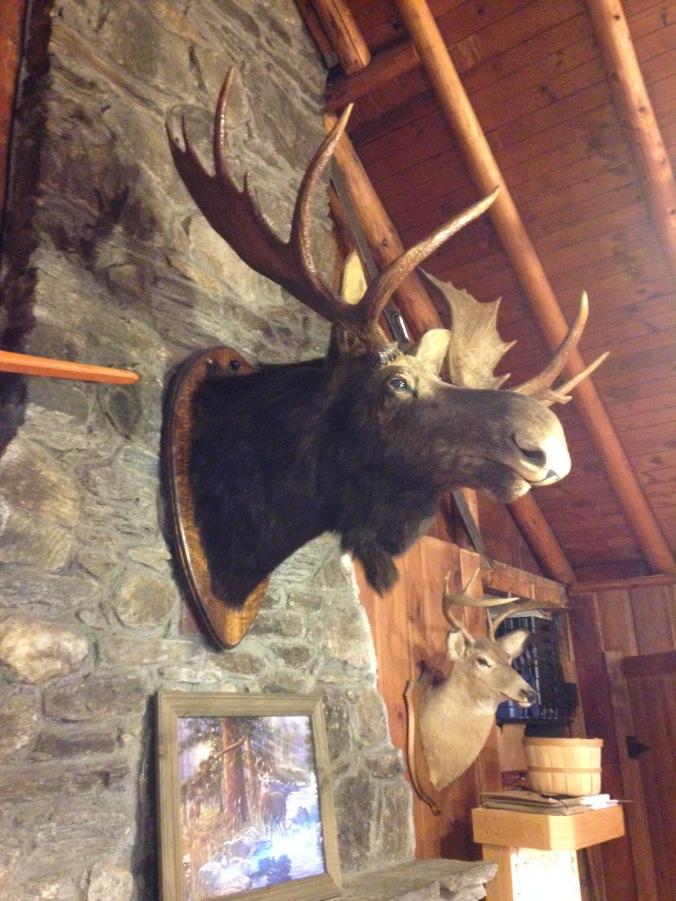 Vermont moose
